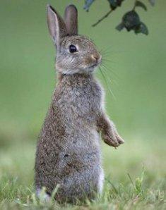 20090417-wild-rabbit-1-1